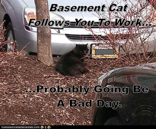 basement cat work - 7245112576
