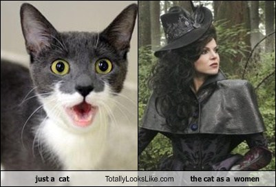 just a  cat Totally Looks Like the cat as a  women