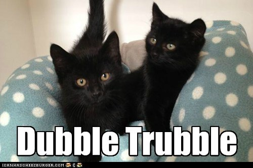 Lolcats - double trouble - LOL at Funny Cat Memes - Funny cat pictures with  words on them - lol | cat memes | funny cats | funny cat pictures with words