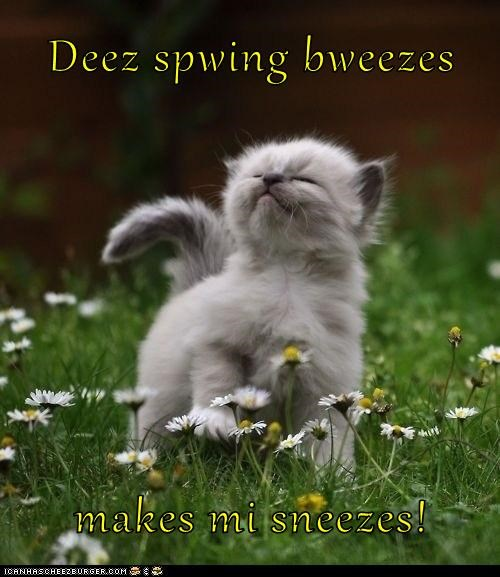 allergies spring sneezing kitten - 7245320448