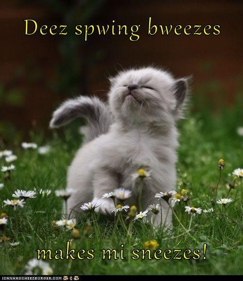 allergies spring sneezing kitten - 7245320448