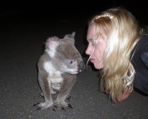 kisses,koala