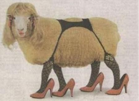 wtf sheep clothes - 7245346816