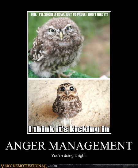 anger,owls,drug stuff