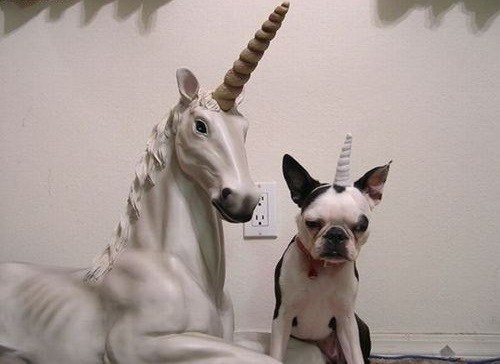 unicorn,pug,not amused