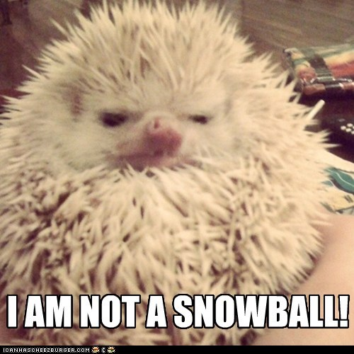 hedgehog snowball