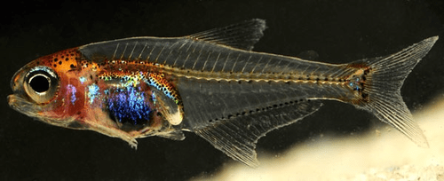 amazon science fish - 7245710080