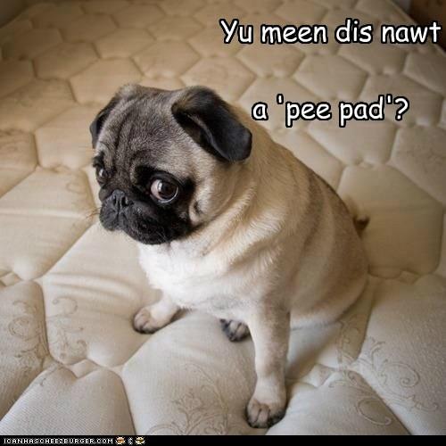 pug pee - 7245730048