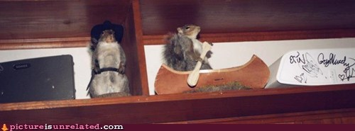 canoe hats wtf-squirrels