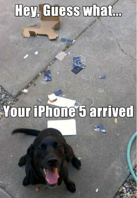 arrived dogs iphone 5 destroyed - 7246005504