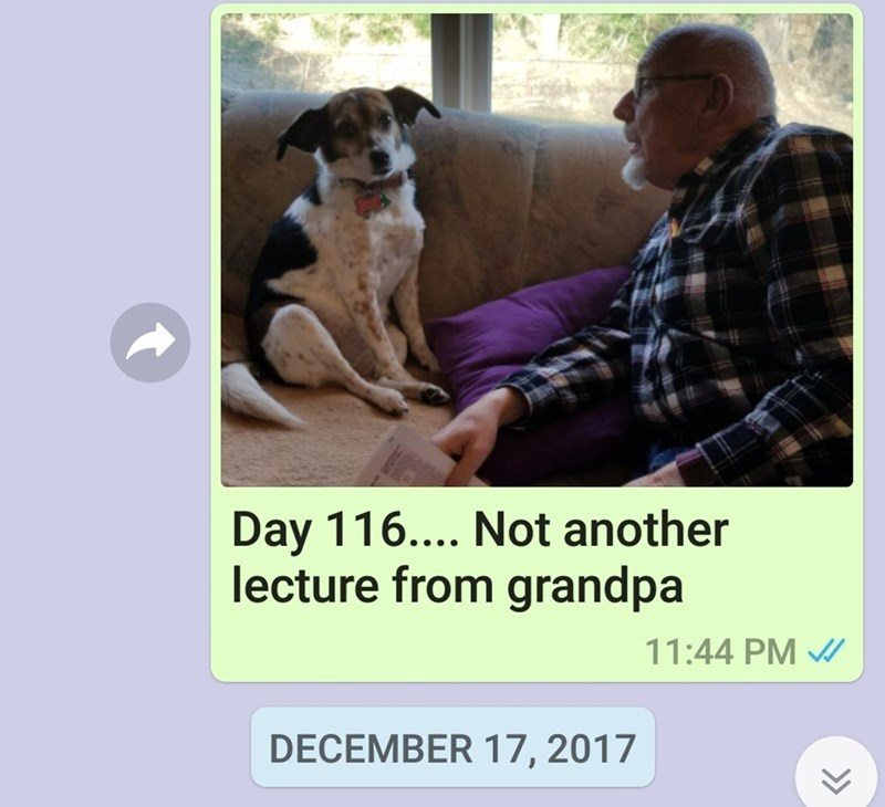 dogs funny dogs daily update overseas mom - 7246085