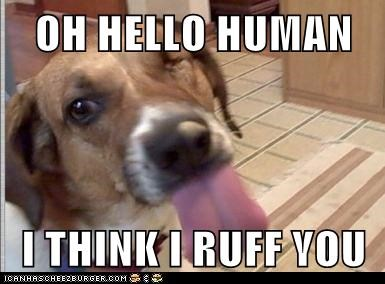 OH HELLO HUMAN  I THINK I RUFF YOU