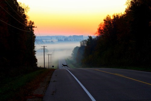 sunrise,deer,Travel,road trip