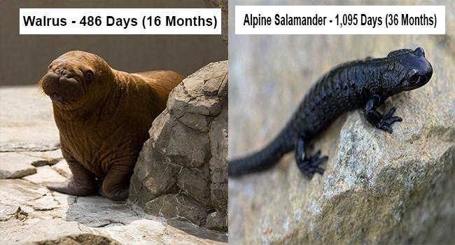 period pregnancy long moms animals - 7247365