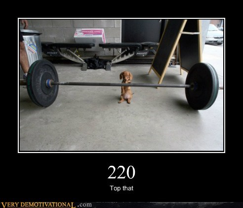 dogs weight swole - 7247756800