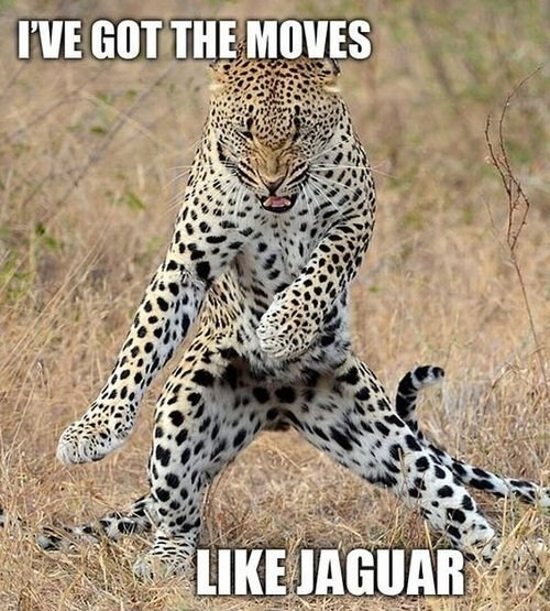 jaguars puns mick jagger moves like jagger maroon five - 7254456832