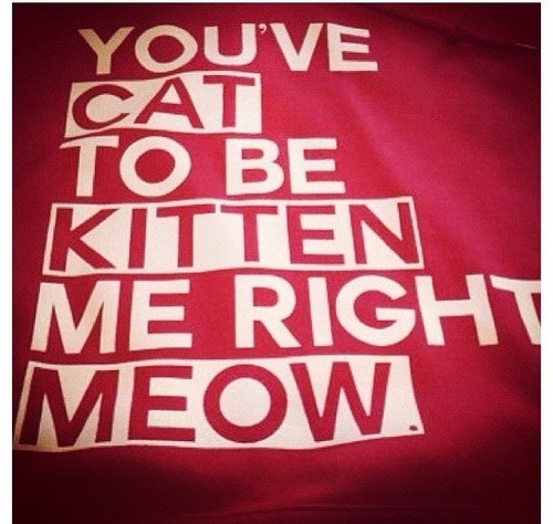Cats,puns,sweatshirts,poorly dressed,g rated