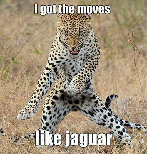 jaguar,adam levine,Cats