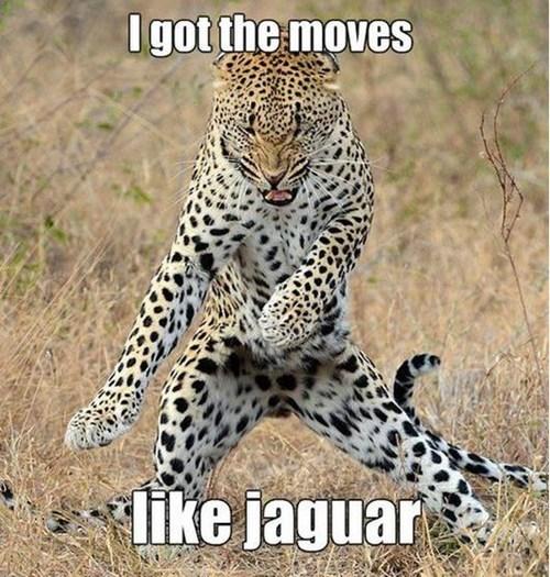jaguar adam levine Cats - 7254700288