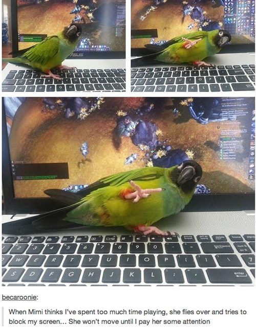 video games birds