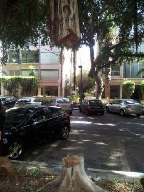 landscaping trees parking lots - 7254781952