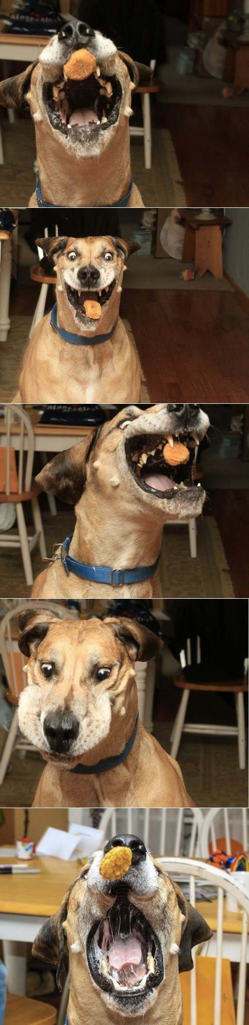 chicken nuggets derp dogs - 7255779072