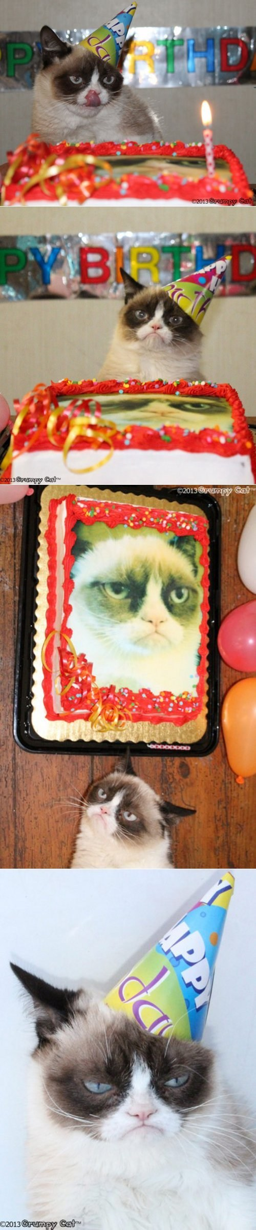 birthday Grumpy Cat - 7255993344
