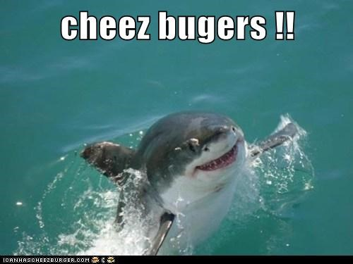 Cheezburger Image 7256751872