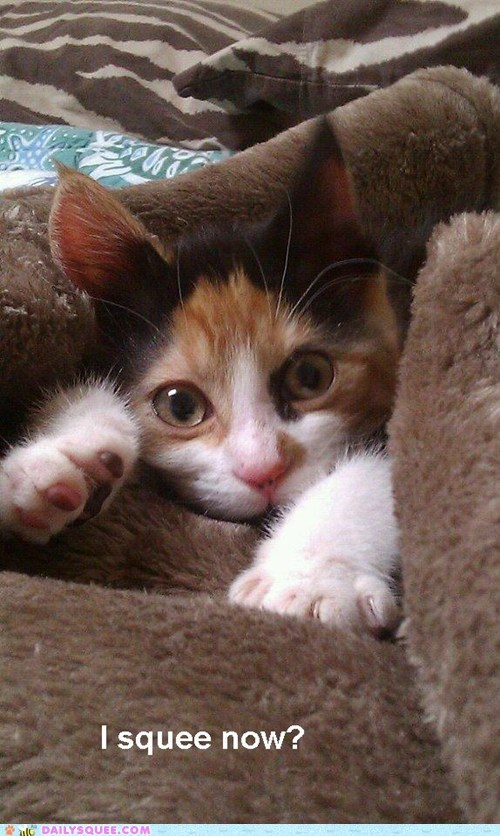 kitty - 7257087488