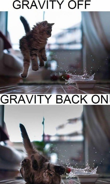 Gravity,Cats