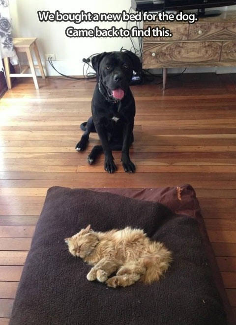bed dogs sleep - 7257281536