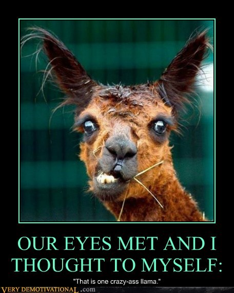 OUR EYES MET AND I THOUGHT TO MYSELF: