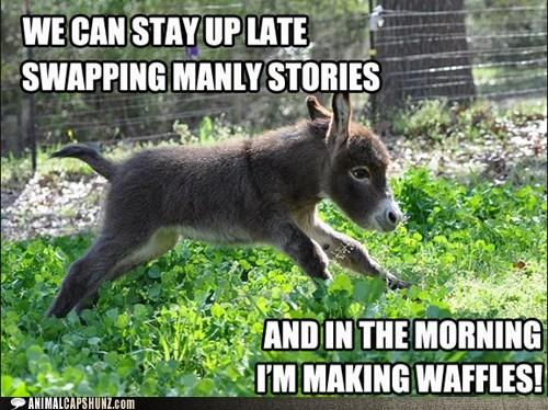 donkey,shrek,squee