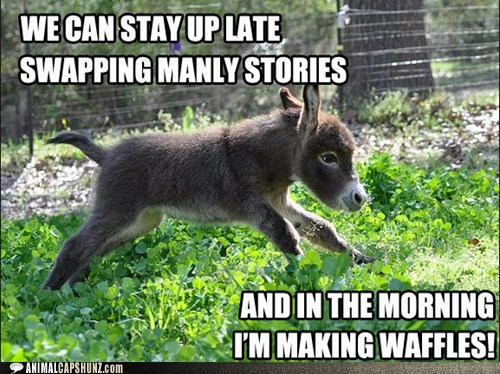 donkey shrek squee - 7258315776