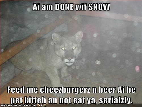 Ai am DONE wif SNOW Feed me cheezburgerz n beer Ai be pet kitteh an not eat ya, serialzly.