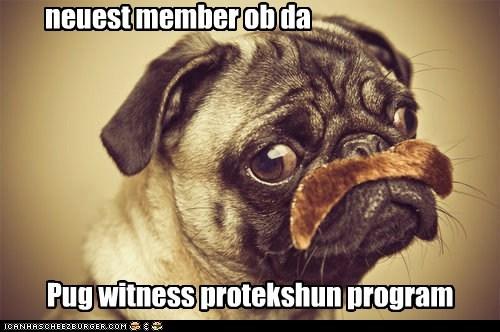 Pug witness protekshun program neuest member ob da