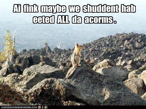 Ai fink maybe we shuddent hab eeted ALL da acorms .