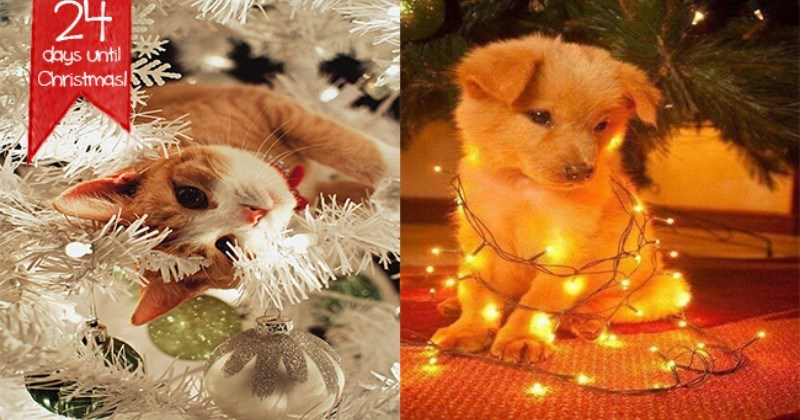 aww christmas lights cute animals holidays happy holidays - 7265029