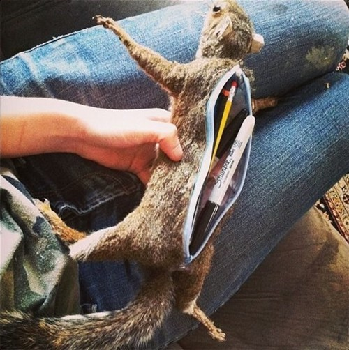 pencil,squirrel,pouch,taxidermy