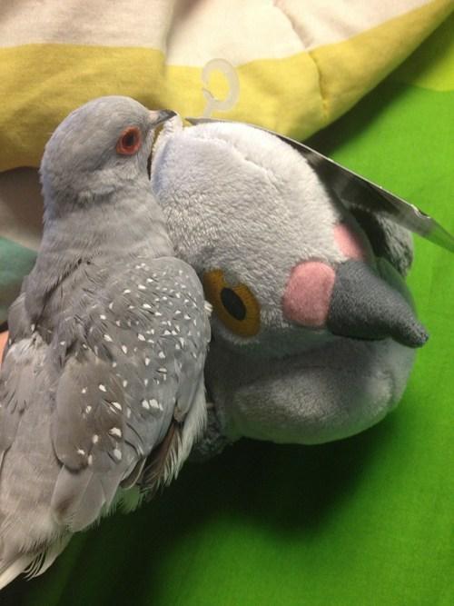 pidove IRL Plushie doves bird - 7265875712