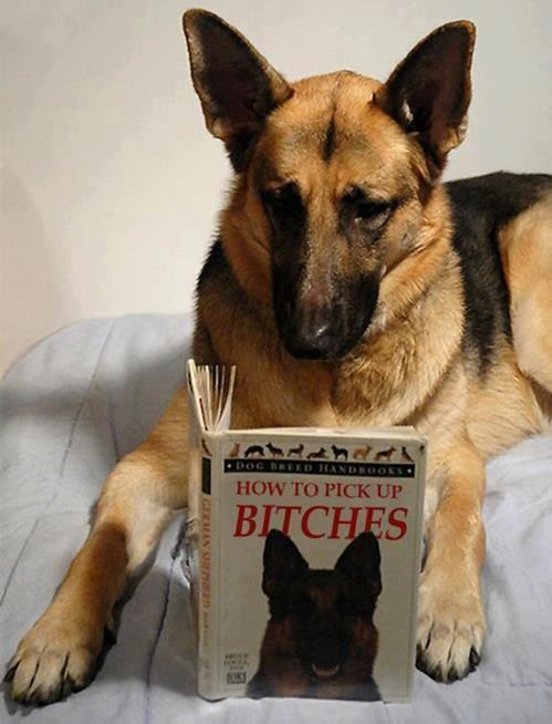 reading book picking up chicks - 7265985536