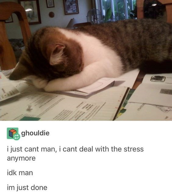 funny animal memes about college life