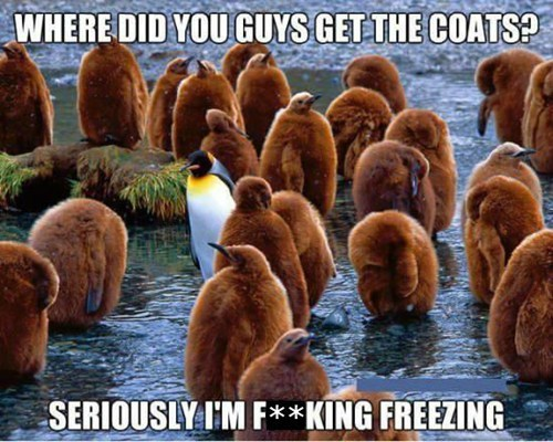 coats,penguins,odd man out