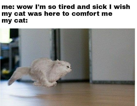 meme about cat rushing to comfort owner