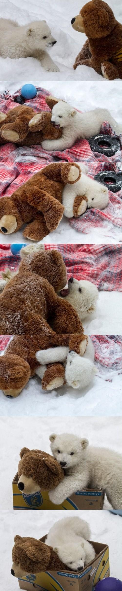 teddy bear polar bear attack - 7267425024
