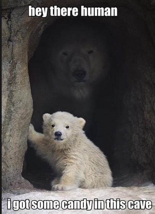 candy polar bear - 7267433472