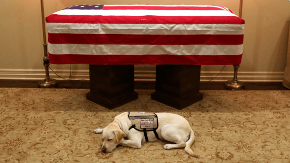 Death george w bush service dogs - 7267589