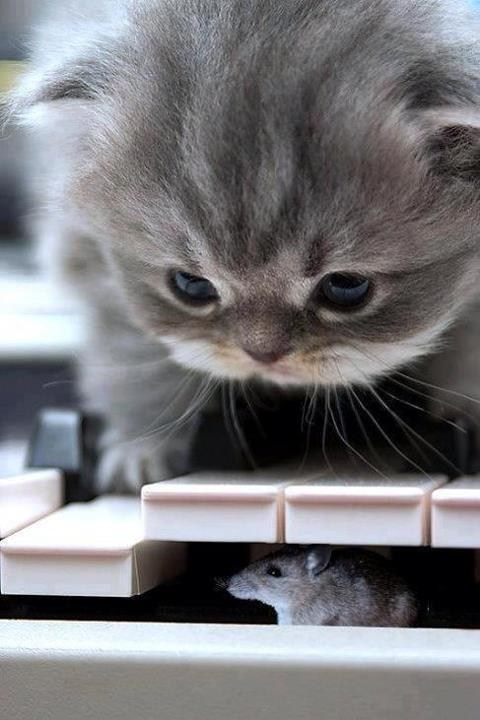 mice pianos Cats - 7268157952