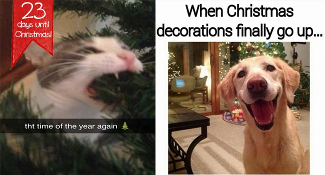 holiday memes, animal memes, happy holidays, funny pets