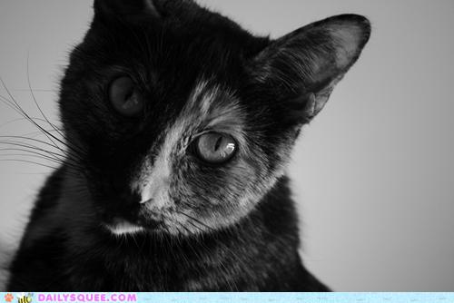 cat ridiculously photogenic - 7270404864